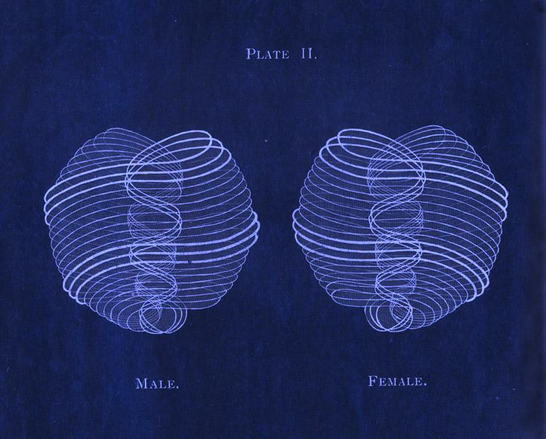 male-female