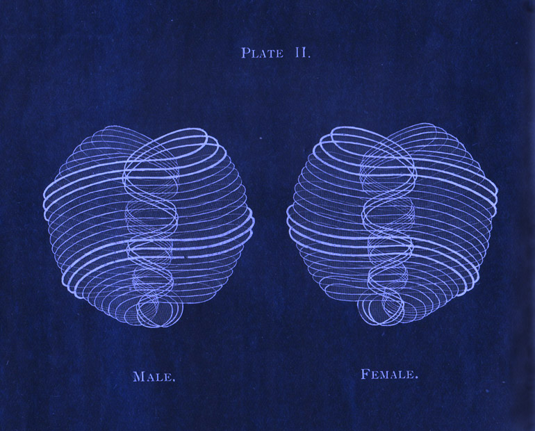 male-female